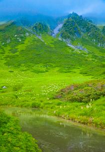 千畳敷カールのお花畑と剣ヶ池の写真素材 [FYI01625729]