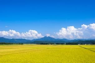 秋の田園風景の写真素材 [FYI01625744]