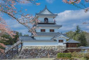 白石城三階櫓とサクラの写真素材 [FYI01625967]