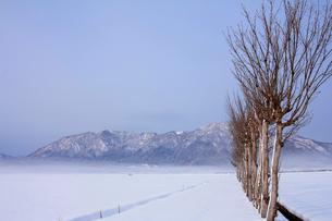 雪の弥彦山とハサ木の写真素材 [FYI01626047]