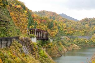 秋の三面川の写真素材 [FYI01626102]