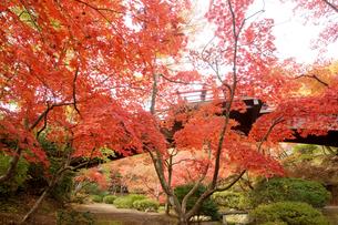 秋の弥彦公園もみじ谷の写真素材 [FYI01626114]