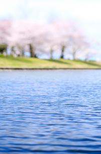 新潟県スポーツ公園の桜の写真素材 [FYI01626119]