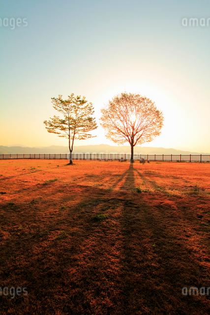 朝日と木立の写真素材 [FYI01626141]