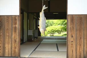 軒先に吊るす鮭の写真素材 [FYI01626193]