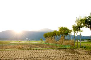 刈り取った後の田んぼの写真素材 [FYI01626217]