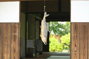 軒先に吊るす鮭の写真素材 [FYI01626255]