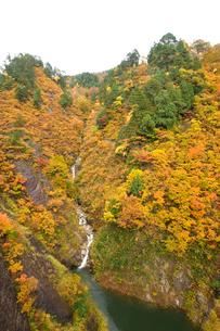 秋の三面川の写真素材 [FYI01626258]