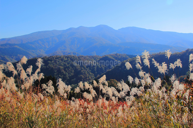 秋の道院高原と守門岳の写真素材 [FYI01626344]