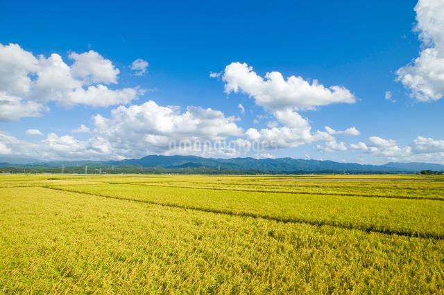 秋の田園風景と五頭連峰の写真素材 [FYI01626361]