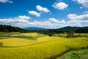 秋の棚田と守門岳の写真素材 [FYI01626419]
