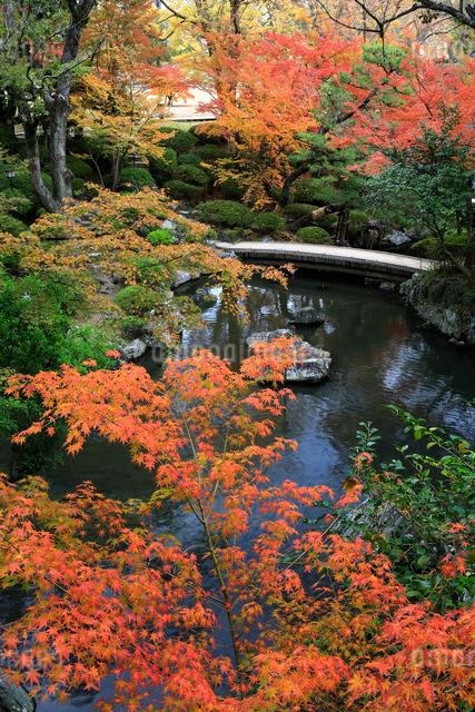 紅葉渓庭園の紅葉の写真素材 [FYI01626422]