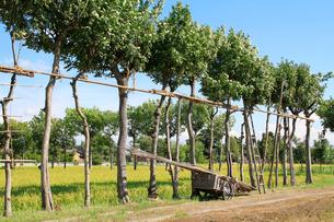 田園風景とハサ木の写真素材 [FYI01626475]