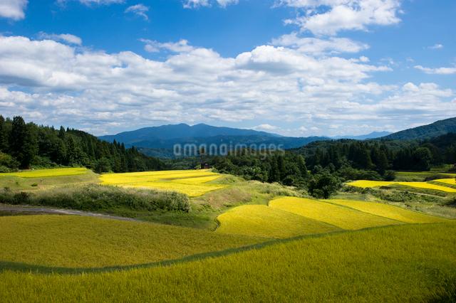 秋の棚田と守門岳の写真素材 [FYI01626582]