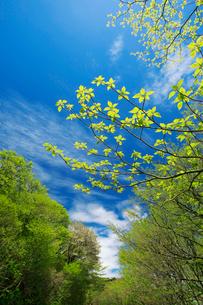 青空に新緑の写真素材 [FYI01626620]