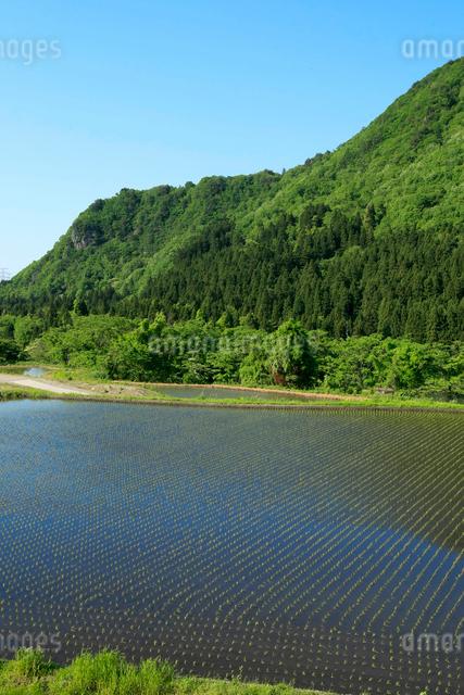 田植え後の田園風景の写真素材 [FYI01626645]