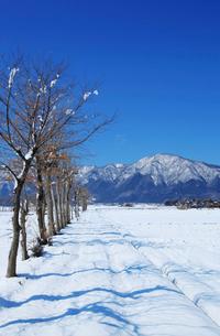 雪の弥彦山とはさ木の写真素材 [FYI01626661]