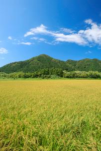 秋の田園風景と下渡山の写真素材 [FYI01626766]