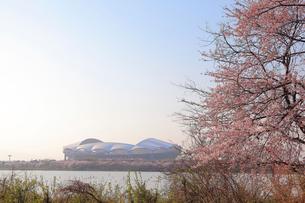 桜と東北電力ビッグスワンスタジアムの写真素材 [FYI01626799]