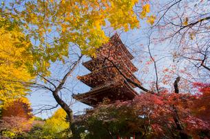 上野五重塔を囲む紅葉と黄葉の写真素材 [FYI01626830]