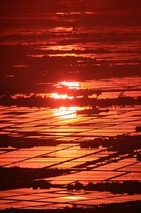 朝日に光る水田の写真素材 [FYI01626922]