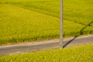 秋の田園風景の写真素材 [FYI01626930]