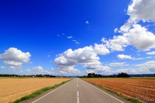 刈り終わった田と道の写真素材 [FYI01627053]