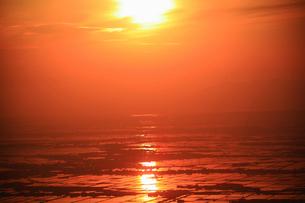 朝日に光る水田の写真素材 [FYI01627135]