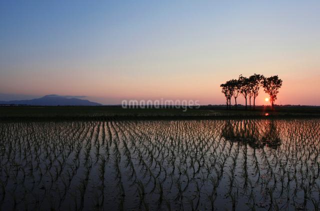 水田の夕景の写真素材 [FYI01627153]