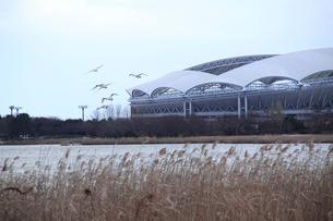 冬の東北電力ビッグスワンの写真素材 [FYI01627182]