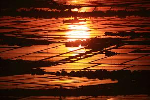 朝日に光る水田の写真素材 [FYI01627427]