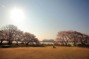 桜と東北電力ビッグスワンスタジアムの写真素材 [FYI01627537]