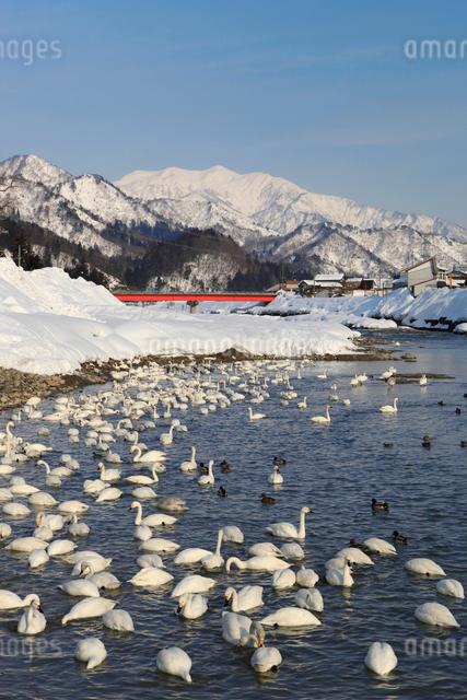 冬の五十嵐川の写真素材 [FYI01627569]