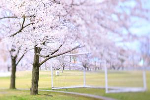 新潟県スポーツ公園の桜の写真素材 [FYI01627618]