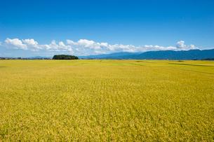 秋の田園風景の写真素材 [FYI01627636]