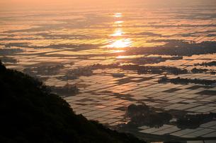 朝日に光る水田の写真素材 [FYI01627661]