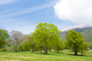 笹ヶ峰高原の写真素材 [FYI01627729]
