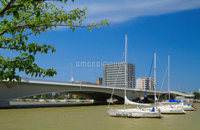 信濃川に架かる柳都大橋とヨットの写真素材 [FYI01627754]