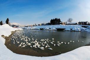 冬の五十嵐川の写真素材 [FYI01627798]