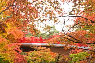 紅葉の中の赤い橋の写真素材 [FYI01627817]