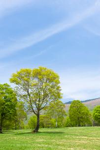笹ヶ峰高原の写真素材 [FYI01627881]