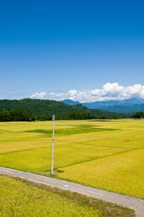 秋の田園風景と農道の写真素材 [FYI01627897]