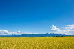 秋の田園風景の写真素材 [FYI01628012]