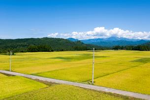 秋の田園風景と農道の写真素材 [FYI01628044]