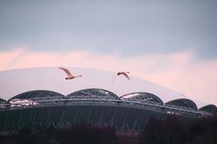冬の東北電力ビッグスワンスタジアムの写真素材 [FYI01628140]