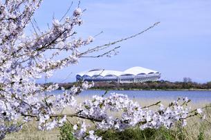 サッカースタジアムと桜の写真素材 [FYI01628174]