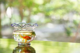 テーブルの上の金魚鉢の写真素材 [FYI01628201]
