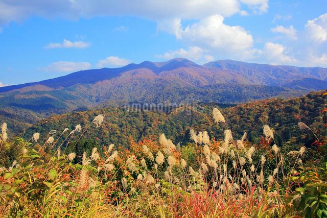 すすきと紅葉の守門岳の写真素材 [FYI01628217]