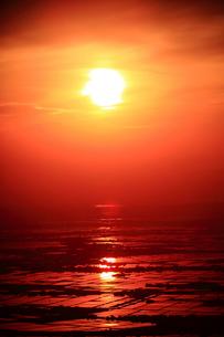 朝日に光る水田の写真素材 [FYI01628260]