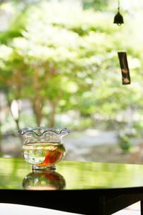 テーブルの上の金魚鉢の写真素材 [FYI01628304]